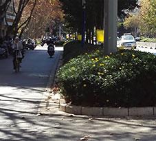 曲靖市绿化带生物防虫